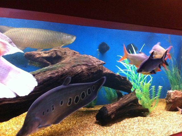 Wooden Reef Tank